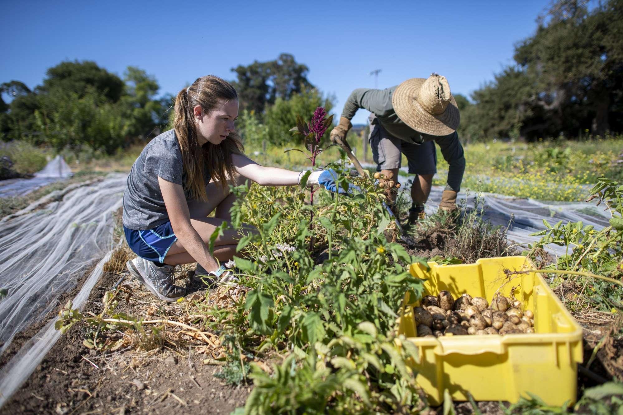 Volunteering gardening